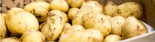 Les textes de références des<br /> pommes de terre vendues à l'état frais
