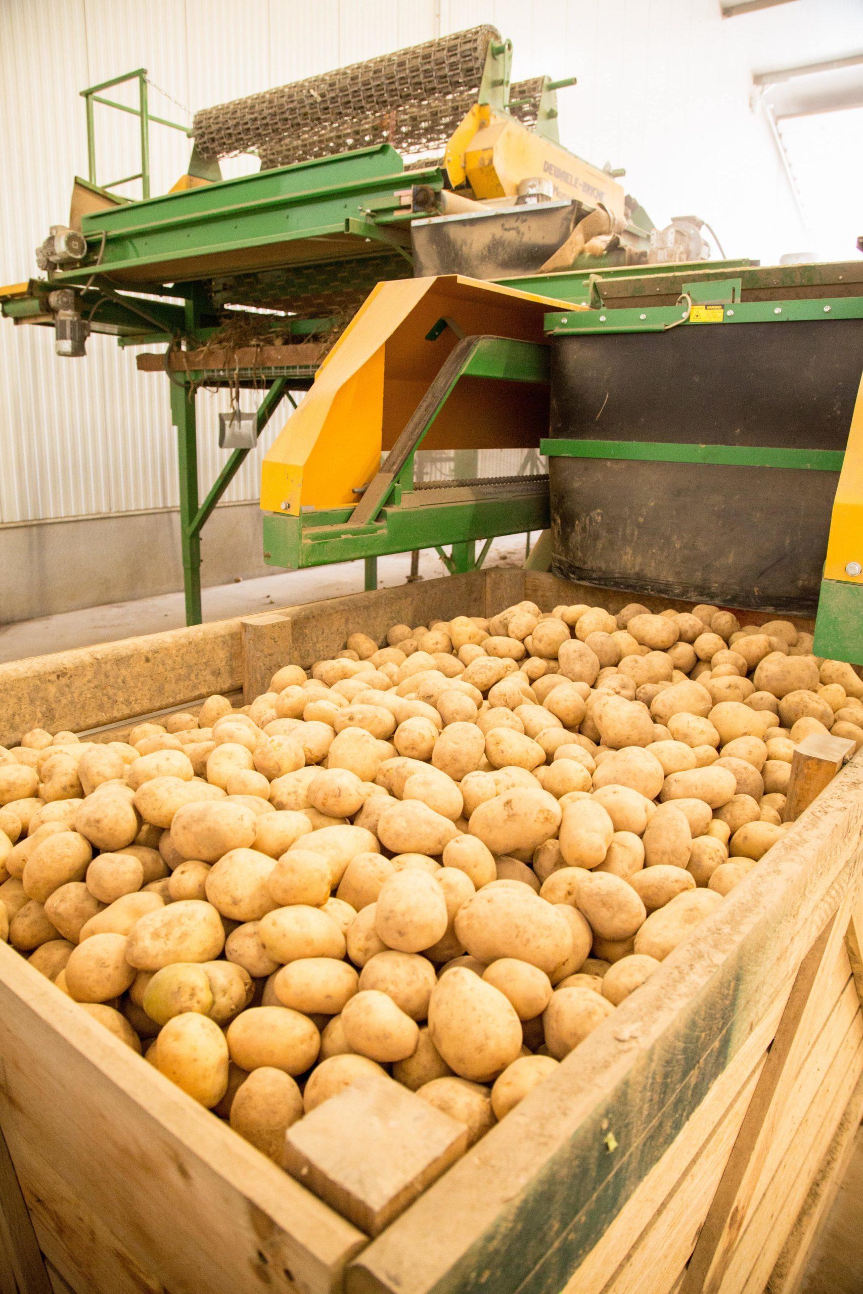 6,1 M tonnes récoltées