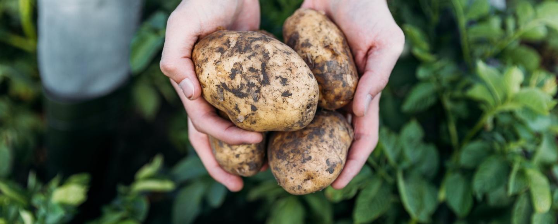 Notre passion commune, <br /> la pomme de terre de nos terroirs